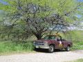 こんなトラックが絵になります。