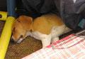auch Amiro hat sich ein Plätzchen gesucht, mitten während dem Spielen eingeschlafen...