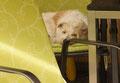 Mandy hat es sich auf dem Sessel bequem gemacht...