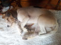 Askia schläft seelig und träumt vom nächsten Spaziergang im Frühling 2014!