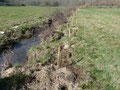 Les plantations sont réalisés en bordure de berge