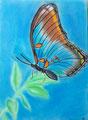 Papillon, pastel de Salomé 11 ans