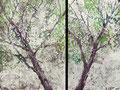 2008 Wald3 73+57x99cm