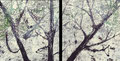 2008 Wald2 92+90x95cm