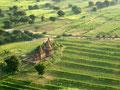 Bagan bei Sonnenaufgang - 19 Punkte - ausgestellt