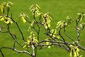 junger Frühling, zartes Grün
