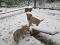 Seetje und Shannon toben im Schnee