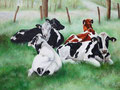 Kühe liegend
