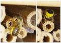 31.05.2015 : Wildbiene, die in den Zwischenräumen nistet