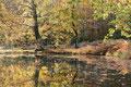Teich im Herbst / ch196914