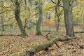 Laubwald im Herbst / ch196904
