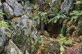 Felsen im Herbst / ch196839