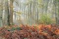 Laubwald im Herbst / ch196902