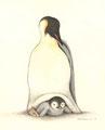 皇帝ペンギンと赤ちゃん 105mm x 75mm