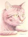 桃色トラ猫 90mm x 70mm