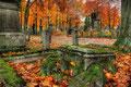 Algemene begraafplaats Venlo