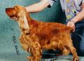 Queeny made in Austria - Dt. Jgd. Champion, Öst. Jgd. Champion, Bundessiegerin Österreich 1998, Dt. Ch. VDH, Dt. Ch. SCD, Dt. Ch. Club, Öst. Ch., Lux. Ch., Ausstellungscupsiegerin, CACIB in 6 Ländern, BOB, BOG