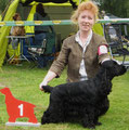Jerry-Lee made in Austria - Deutscher Jugendchampion, BOS, Rassebester-BOB, Best in Show-BIS