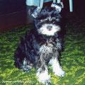 Эрочке 4 месяца, удивительный щенок, умничка, красотулечка, любимочка.