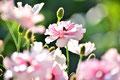 光を得て花は輝く