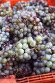 vinho verde_Guimaraes