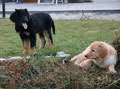 Amira & Arya