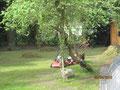 Die Gärtner haben meinen schönen Rasen zerkratzt. Jetzt hängen immer Fussel an mir und wenn ich hereinkomme, zupft Frauchen an mir herum.