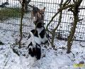 Meine Freundin Xena hat uns am Zaun gesehen und ihren Augen nicht getraut: Das doppelte Julchen???