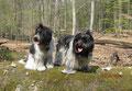 Mama und ich gehen im Wald spazieren.