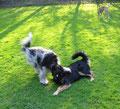 Bevor die Hundeschule beginnt, spielen wir immer ein bißchen; ...