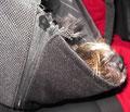 Auf der Rückfahrt habe ich eine Runde in meiner Hängematte gedöst.