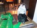 Neulich lag im Wohnzimmer ein Krokodil herum. Es sah etwas anders aus als das von Aurel. Als ich hineinbeißen wollte, hieß ich wieder JuleNEIN.