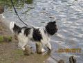 Zara ist im Stadtparksee baden gegangen. Ich durfte nicht, denn ich hatte noch das Pflaster am Bauch.