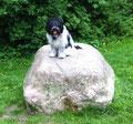 """Manchmal muß ich """"hopp"""" auf diesen Stein hüpfen."""