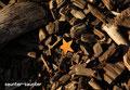 star(アメリカ・ニューヨーク)