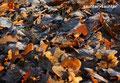 autum leaves(ポーランド・何処か)