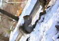 wintering(アメリカ・ニューヨーク)