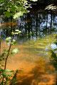 Waldfluß