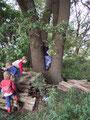 Wir arbeiten am Kräftebaum