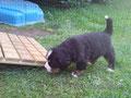 Wir erkunden unseren Garten! Das Schafe blöken vom Deich stört uns gar nicht!!