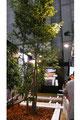 都市緑化のブースには本物の樹木が