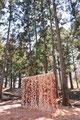 森の陰画|杉|2017| 那珂川町小砂