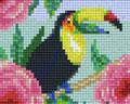 Toucan fleurs