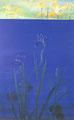 「Irises」1989年/80号/アクリル 麻キャンバス
