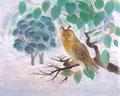 [観」30F/1985年/新珠会/日本画