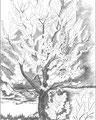 Kirschblueten 5, 2009, Bleistift auf Papier, 29,7 x 42 cm