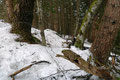 … tauchte in Fichtenwald ein und ...