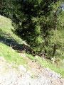 Auf einer Seehöhe von ca. 1000m mussten wir nochmals eine Forstraße queren ...