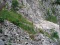 Nachdem ich den hinteren Langbathsee hinter mir gelassen hatte, führte der Weg weiter in Serpentinen durch den Wald, zum eigentlichen Einstieg.
