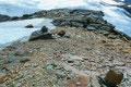 Man durfte sich nicht abhalten lassen. Einfach dem Gletscherrand bis hoch zum Rosimjoch folgen! Steinmännchen halfen den richtigen Weg zu finden. Am Joch wechselte die Aufstiegsroute nach links, in NW-Richtung, …
